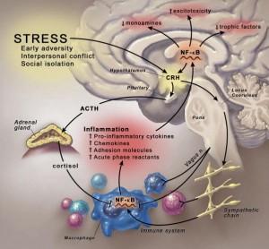 Inflammatory Theory of Depression
